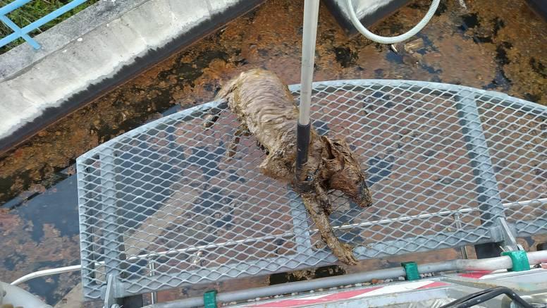 Vatrogasci spasili lisicu koja je pala u bazen s otpadnim uljem: 'Nadamo se da će biti dobro'