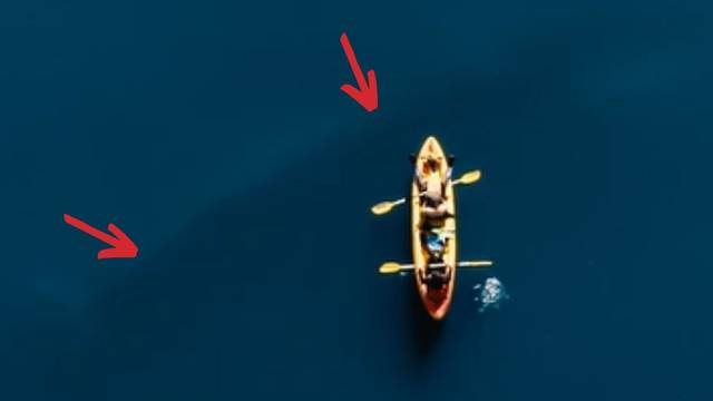 VIDEO Snimio kita u Karinskom moru: 'Prošao je ispod našeg kanua, bio je veći od kamiona'