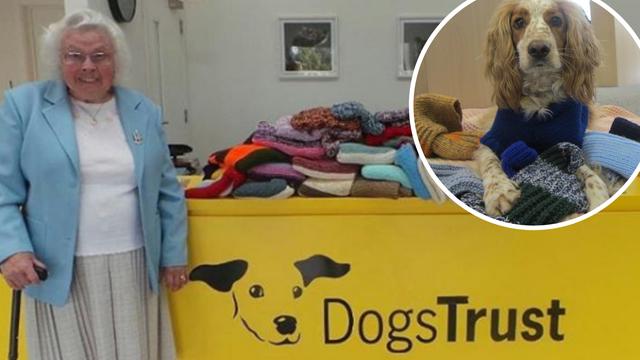 Plete za napuštene pse: Isplela preko 450 dekica i pulovera...