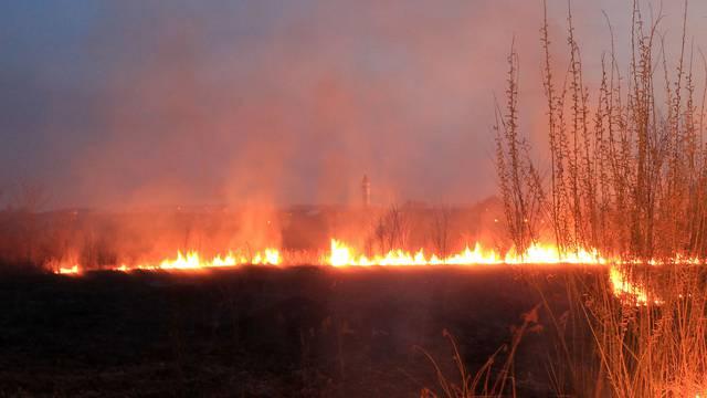 Palila korov i nisko raslinje kod Krnjaka i stradala u požaru
