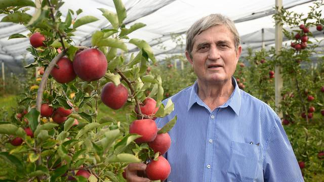 Jabuku na polju otpisuju kao lošu, u trgovini opet kvalitena