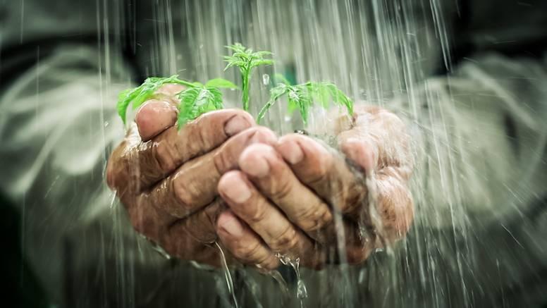Biljke 'paničare' kada pada kiša jer se 'boje' bakterija i virusa