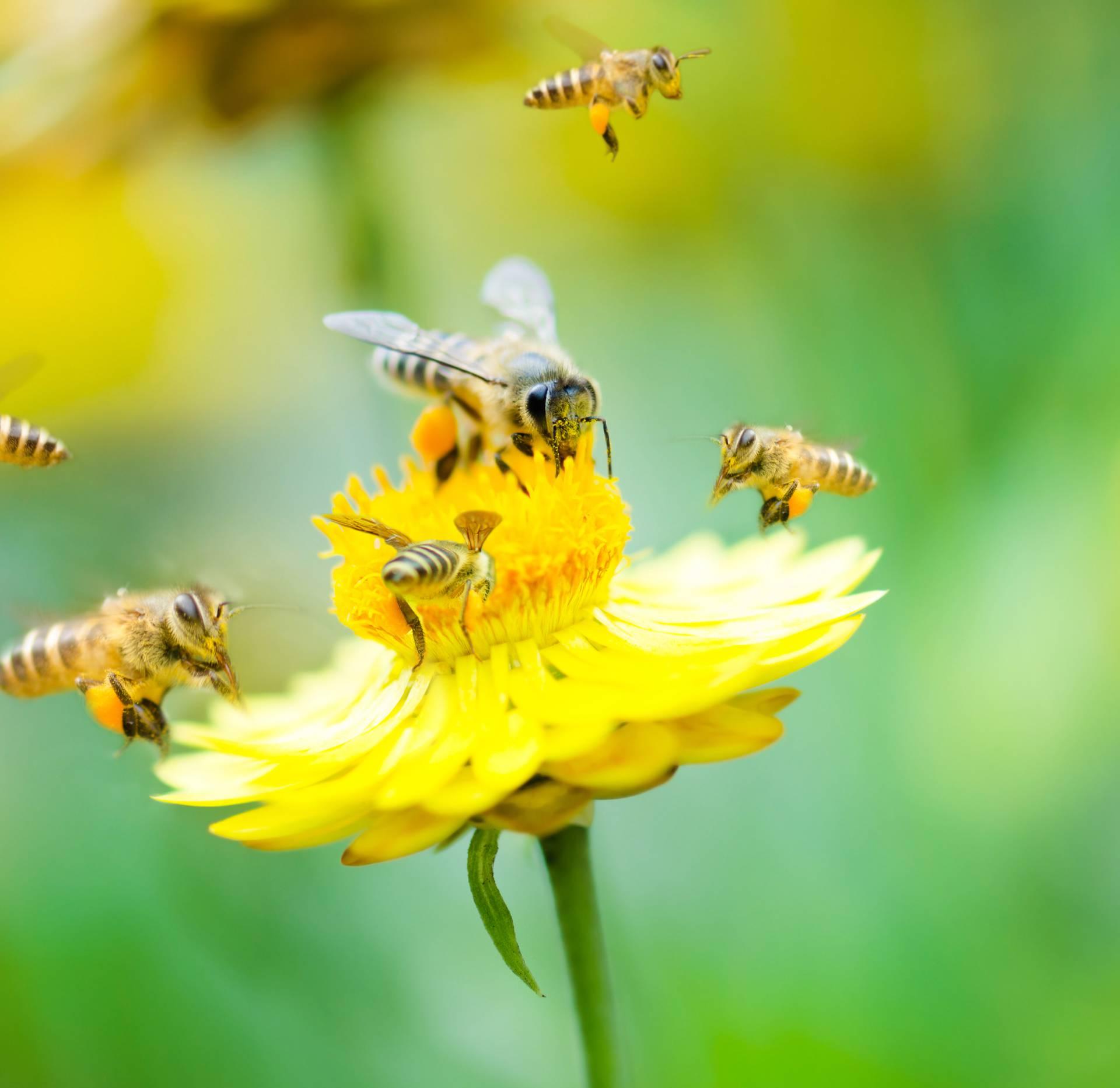 Svjetski dan pčela obilježava se u zagrebačkom Zoološkom vrtu