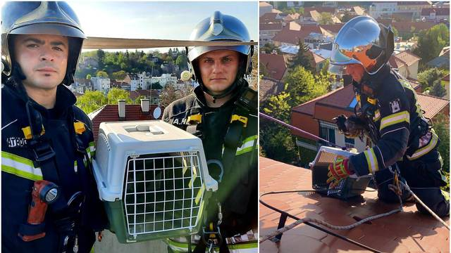 Vatrogasci s krova u Zagrebu spasili ozlijeđenu vranu: 'Sada je dobro, ali čekamo rendgen'