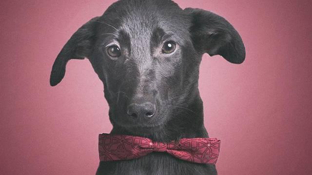Pokažite psima u Dumovcu da nije sve crno ni na Crni petak