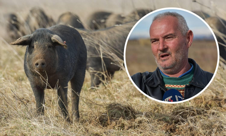 Lovci Miodragu ubili tri svinje: 'Ovo me sad bacilo na početak'