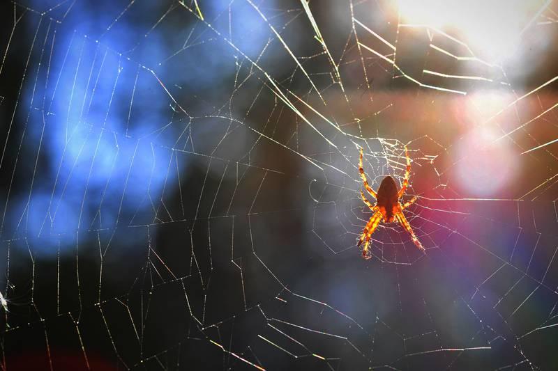 Sezona je pauka: Mama otkrila svoj super trik kako ih se riješiti