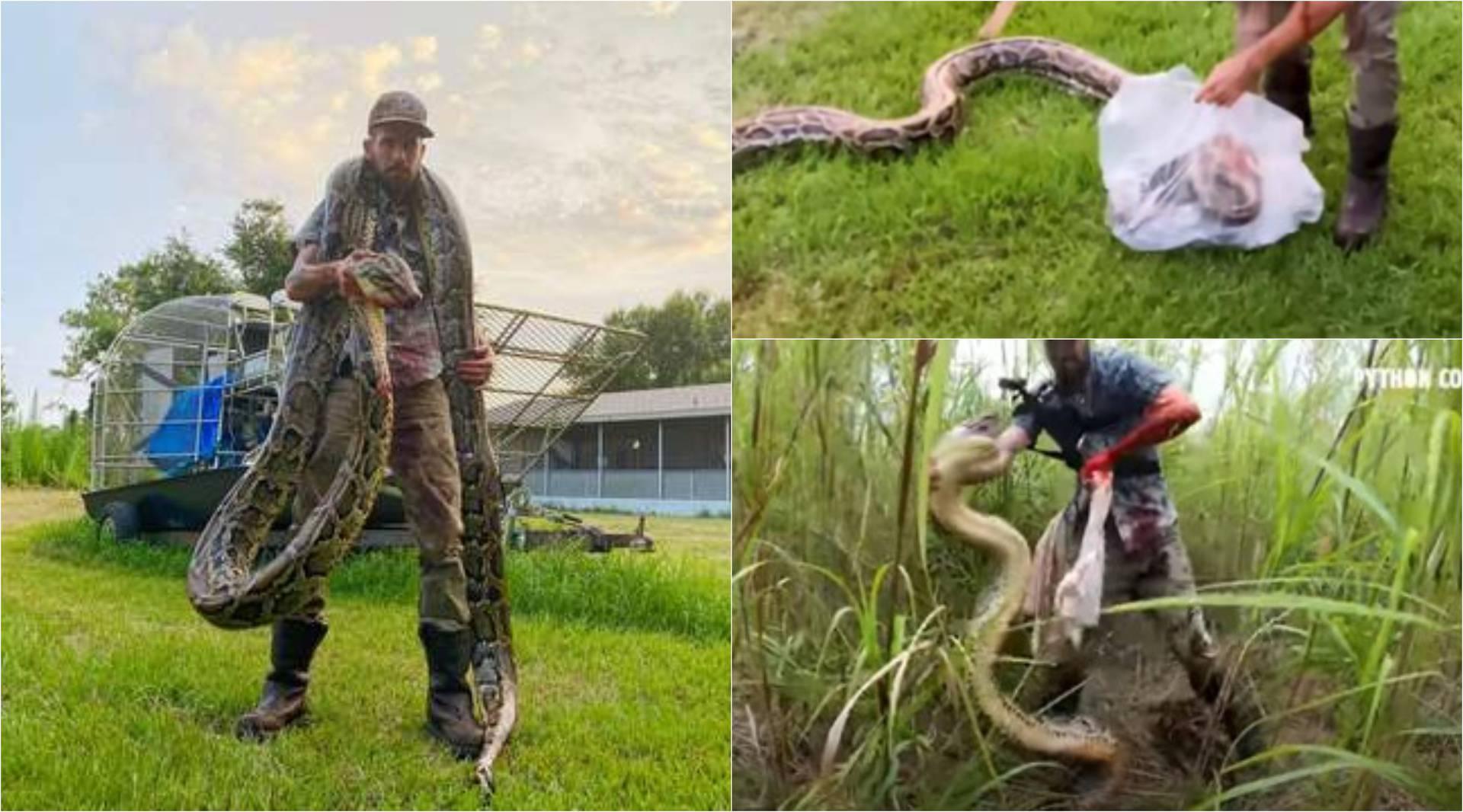 Hrvao se s pitonom od 5 metara koji ga je na kraju uspio ugristi!