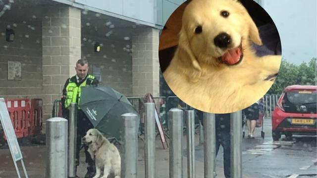 Hit fotka: 'Pa nikad ne znaš kako se psi osjećaju zbog kiše'