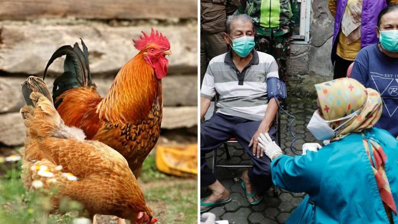 Nema što ne nude za cijepljenje: Krave, kokoši, plaćeni dopust, stan vrijedan milijun dolara...