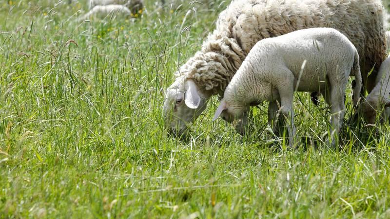 """""""Grom mi je ubio skoro sve ovce, ostao sam bez svega"""""""