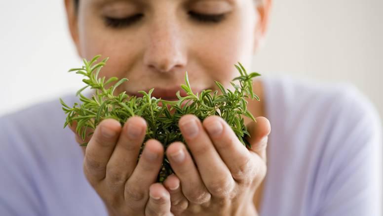 Osim za okus jela, ružmarin je dobar za zdravlje i raspoloženje
