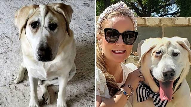 Nesretnog psa napustili su dva puta zbog deformacije, ali i on je konačno pronašao svoju sreću