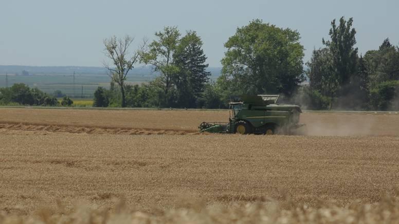 Argentina prva na svijetu dala dozvolu za uzgoj GMO pšenice