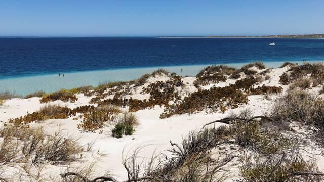 Coastal vegetation and beach area