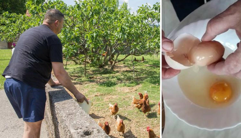 Vlasnik Joško iz Staševice kraj Ploča: Morate vidjeti moje jaje!