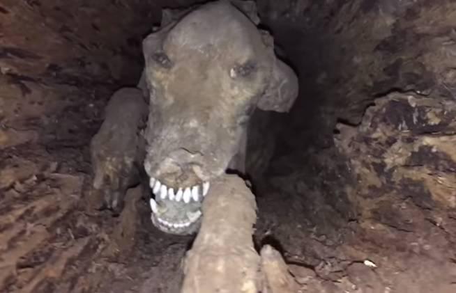 Nazvali ga Stuckie: U deblu pronašli mumificiranog psa