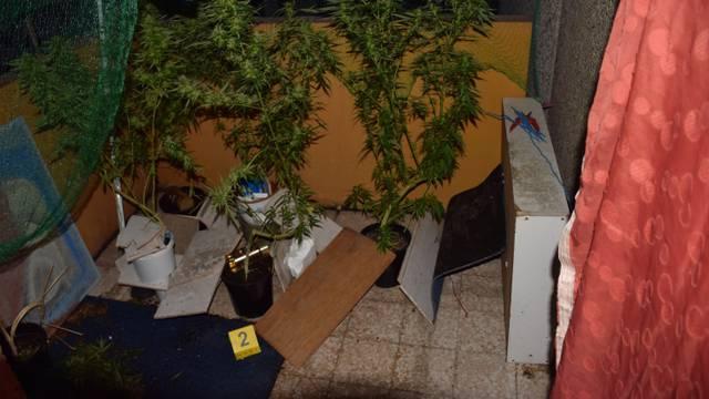 Ulovili uzgajivača marihuane, pronašli mu stabljike u Lipnici