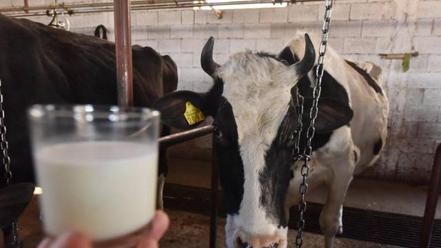 Pala je proizvodnja i potrošnja mlijeka u odnosu na lani...