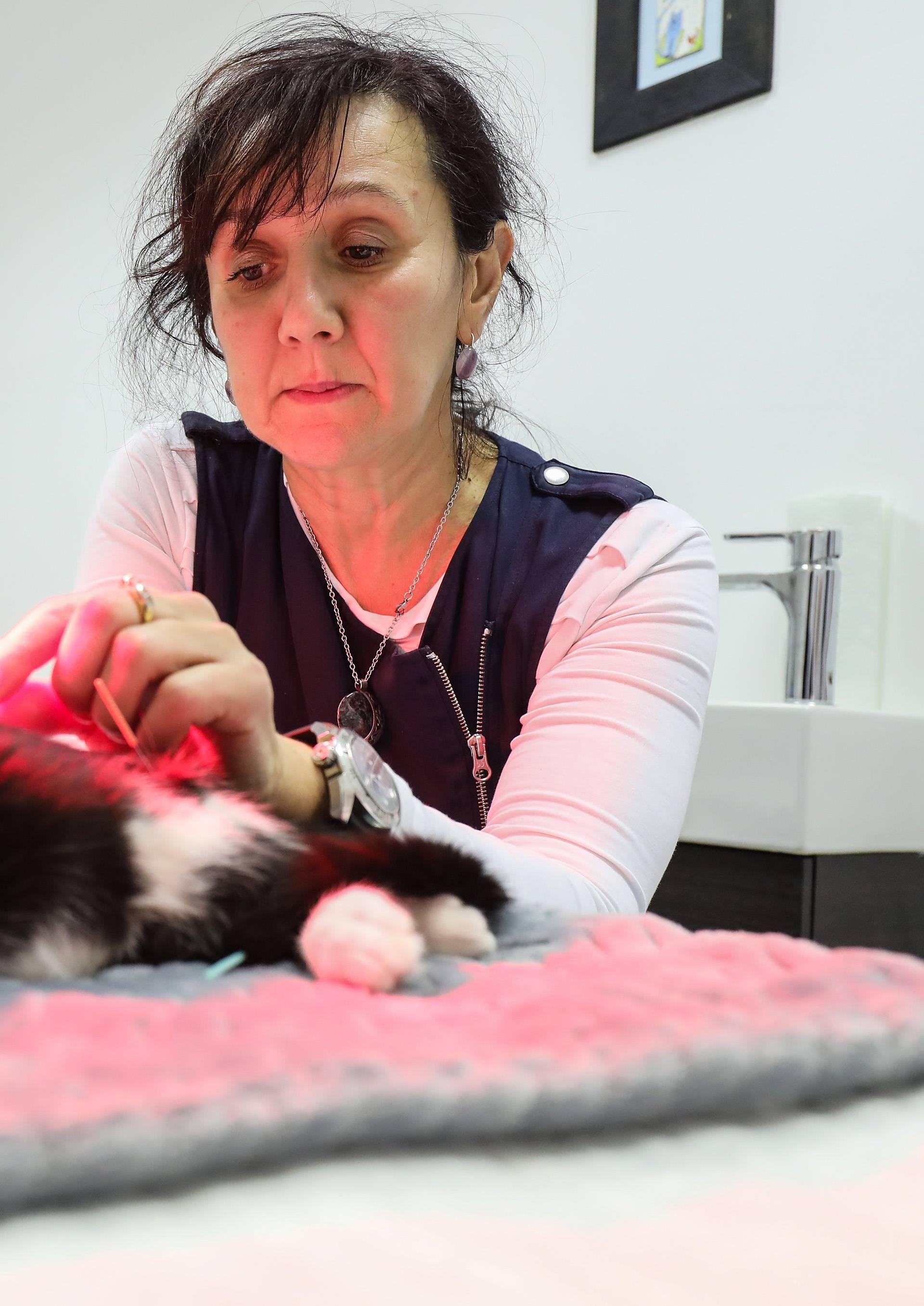 Kućni ljubimci na akupunkturi: Pomaže im kod brojnih bolesti