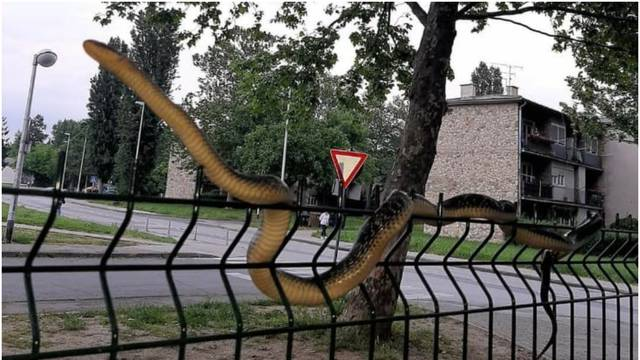 Zatekla veliku zmiju kraj parka u Dubravi: 'Prepala sam se, pa bila je ogromna! Tu je i škola'