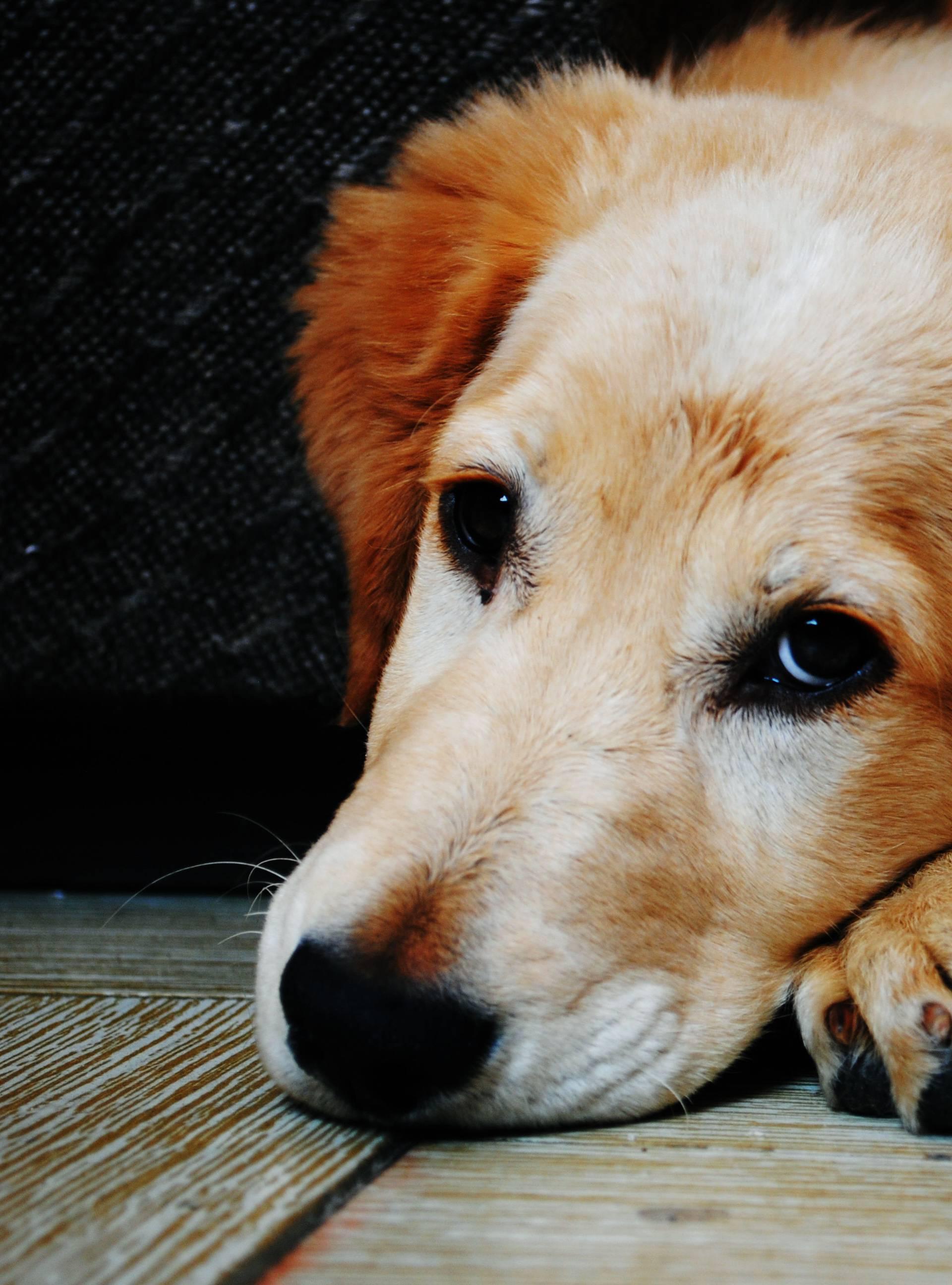 Kako im pomoći: Zbog petardi psi mogu doživjeti srčani udar