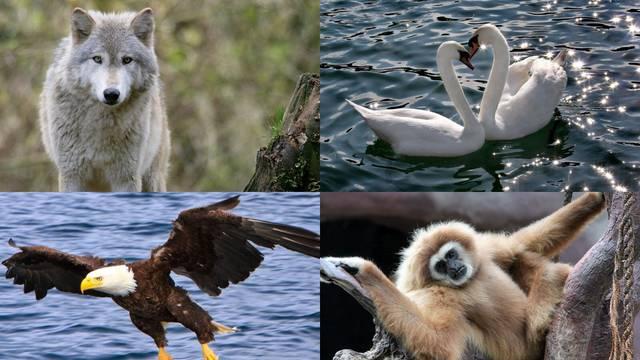 11 monogamnih životinja: Do kraja života vjerni partneru
