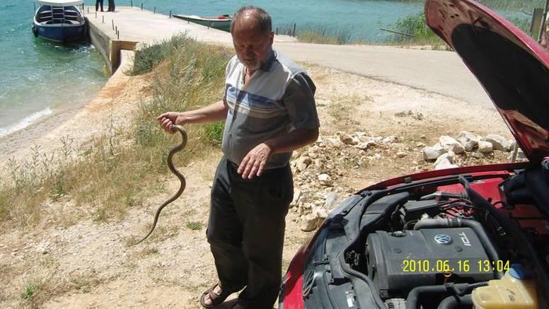 Najezda gmazova: Spasio zmiju pa ga dvaput ugrizla
