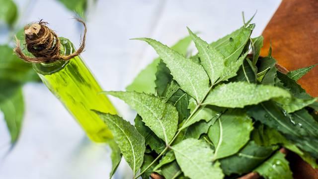 Prirodnim uljem obranite svoje biljke od napada buba i kukaca