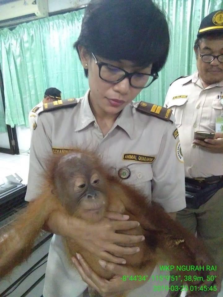 U koferu mu našli nadrogiranog majmuna: 'Kupio sam ljubimca'