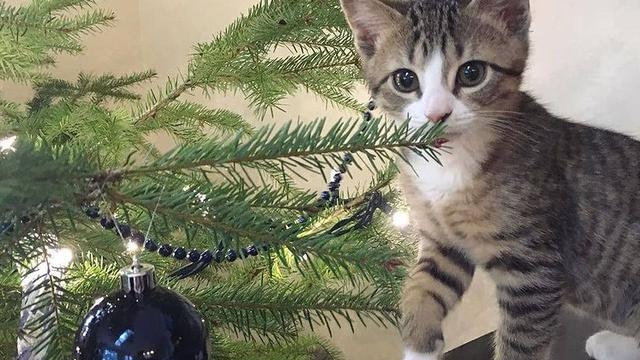 Zaštitite ljubimce od božićnih ukrasa - odlučite se za umjetne