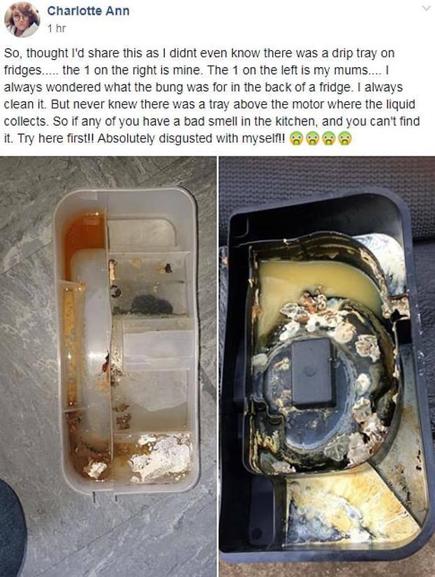 Otkrila je posudu za kondenzat u hladnjaku i ostala šokirana
