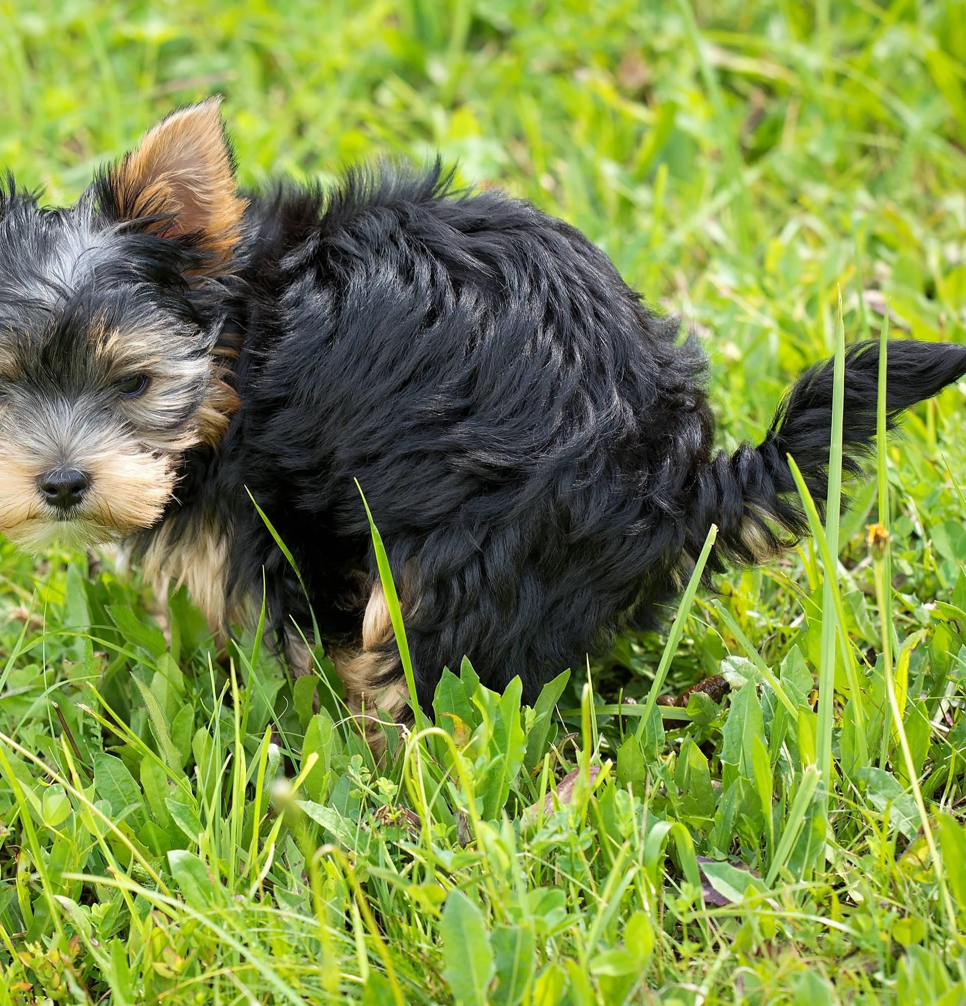 Opasnosti psećeg izmeta: Truje biljke, prenosi ljudske bolesti...