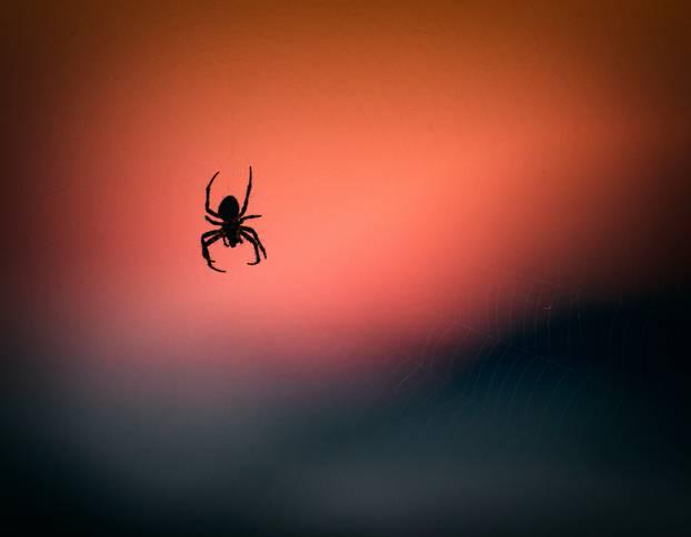 Ilustracije pauka