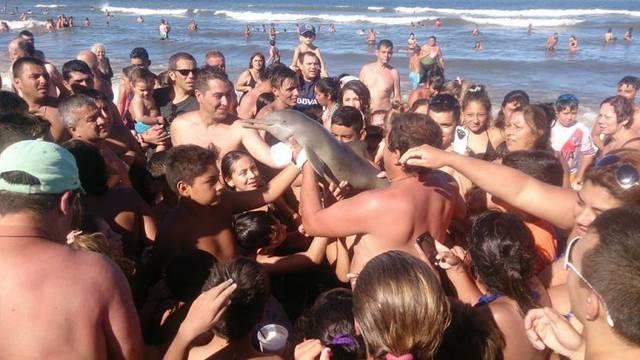 Još jedna žrtva 'selfie manije': Izvukli dupina iz mora i ubili ga