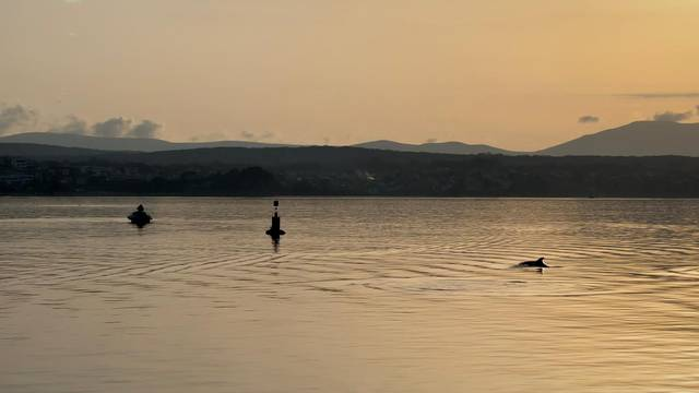 Prekrasan prizor! Jato dupina plivalo uz zalazak sunca na Krku