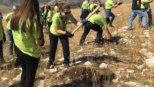 Akcija 'Boranka': U Dalmaciji su zasadili 25 tisuća sadnica