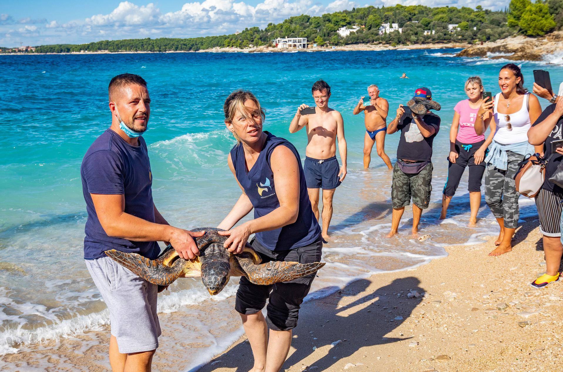 Pula: U more su vraćene četiri oporavljene morske kornjače! Pomagali i oduševljeni klinci