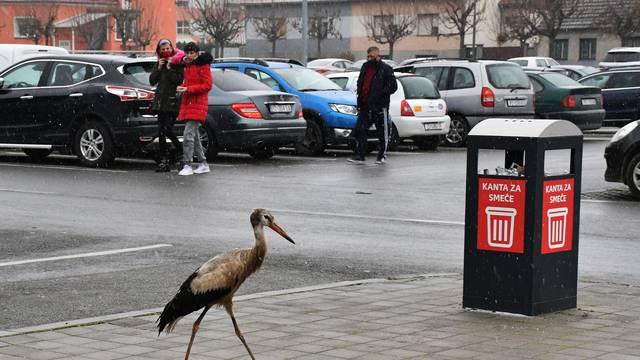 Požega Roda traži sklonište od hladnoće na parkiralištu Kauflanda