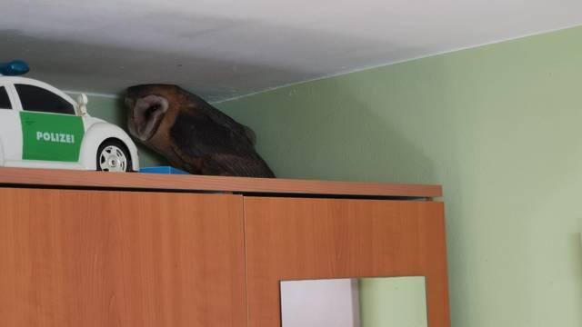 VIDEO Kod Đakova sova uletjela u sobu kroz prozor: 'Čuo sam grebanje, mislio sam da je miš'