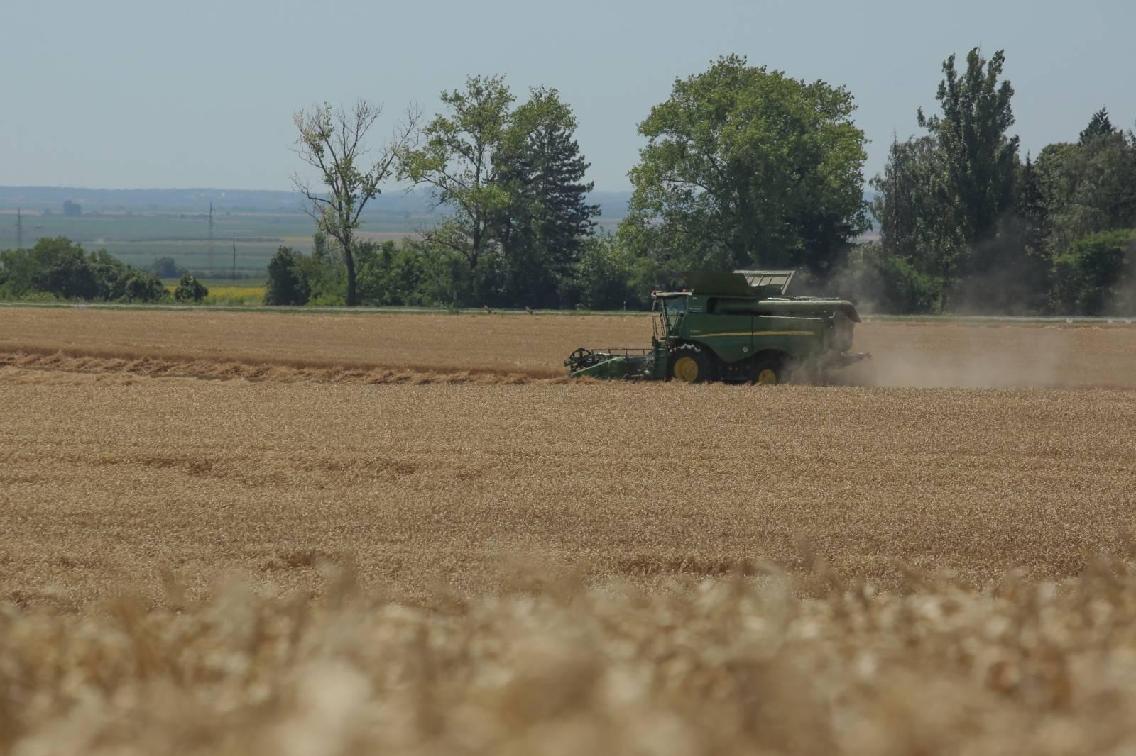 Osijek: Žetva pšenice u Slavoniji