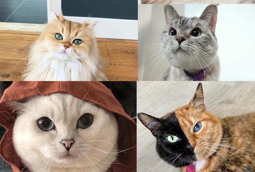 Zvijezde Instagrama: Ovo su mačke koje prate milijuni ljudi