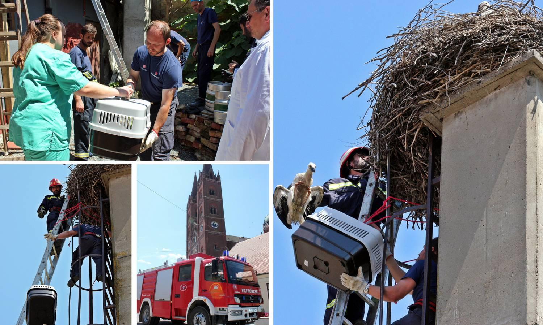 Akcija u Đakovu: Rodana koji još ne leti vratili su u gnijezdo