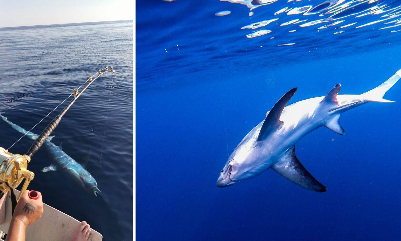 Oči u oči s nemani: Na udicu upecao morskog psa od 3 metra