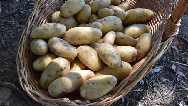 Odličan način kako spriječiti da vam krumpir proklija- lako je