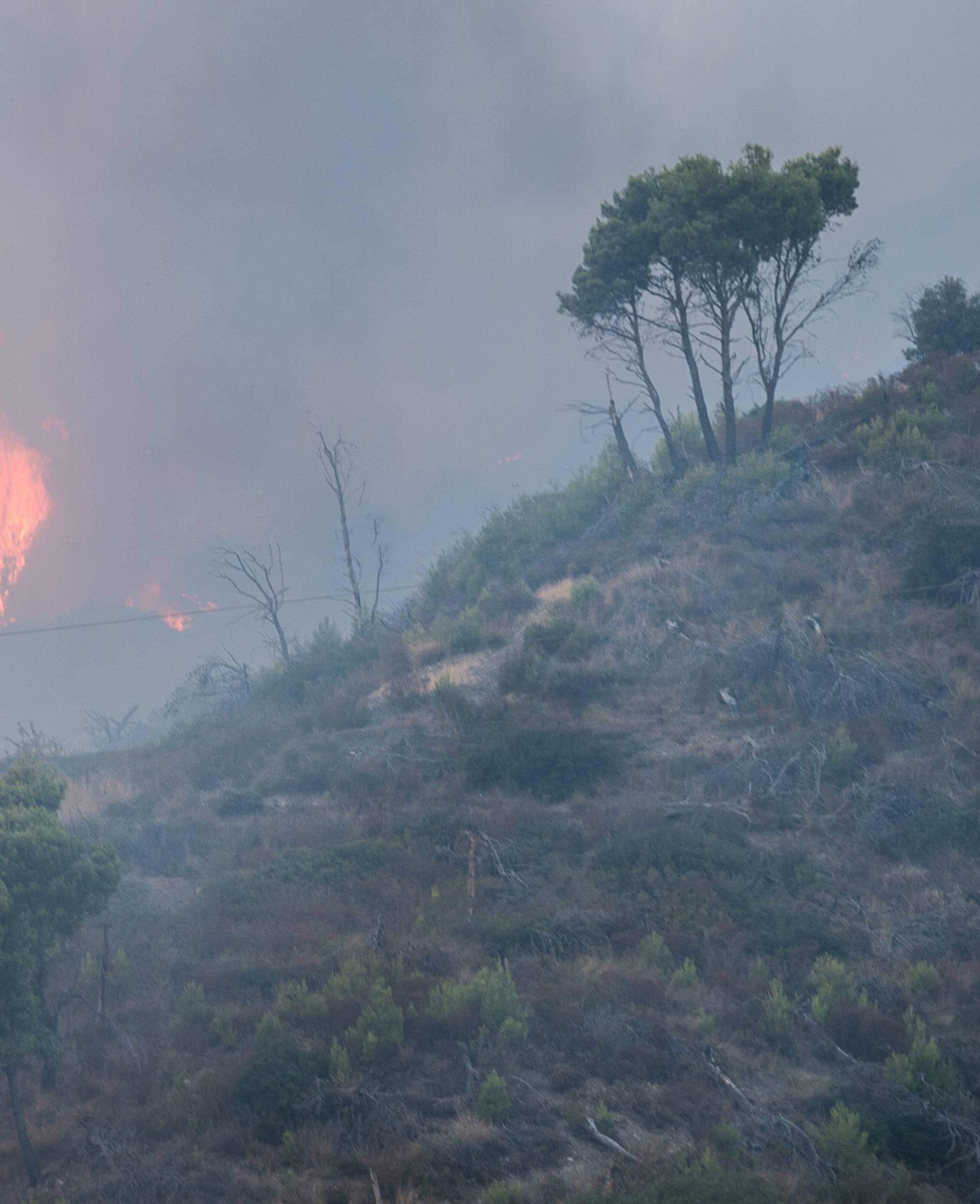 Trebisacce, a vast fire destroys acres of wood at the foot of Pollino in Calabria