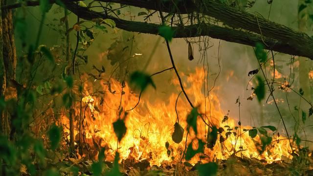 Amazona: Najviše požara u lipnju od 2007. godine