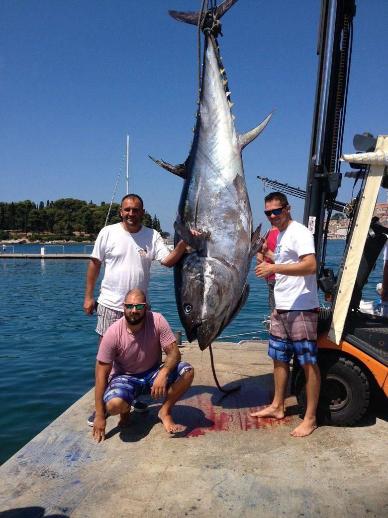 Skakali od sreće u more: Ulovili rekordnu tunu tešku čak 340kg