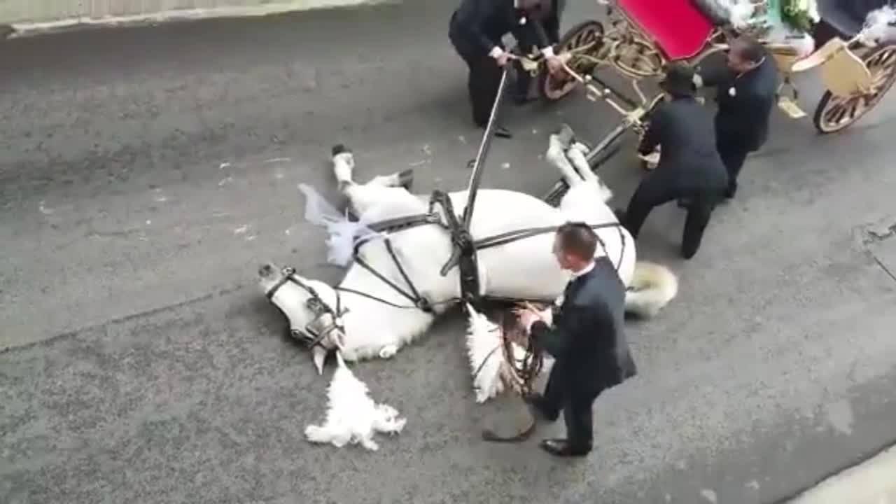 Konj pao u nesvijest