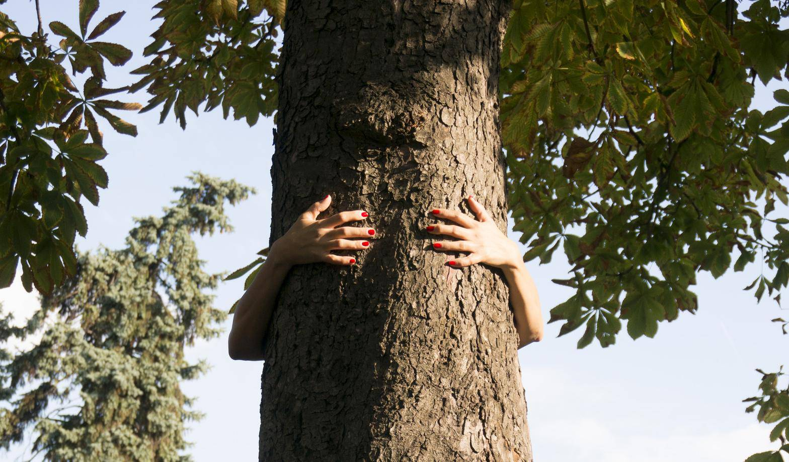 hands hugging a tree